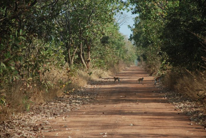 Senegal, Gambia, Gwinea-Bissau 2013 – dzień 18