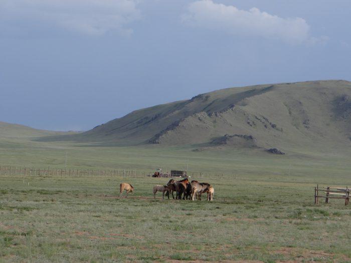 Mongolia 2013 – dzień 14
