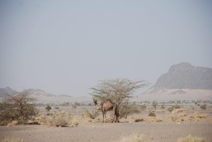 Maroko, Sahara Zachodnia, Mauretania 2011 – dzień 17