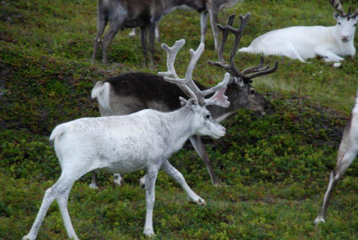 Skandynawia 2009 – dzień 1