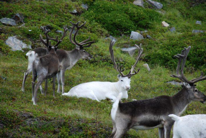 Skandynawia 2009
